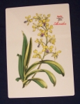 Spode Floral Porcelain Tile, Aerides, English Bone China